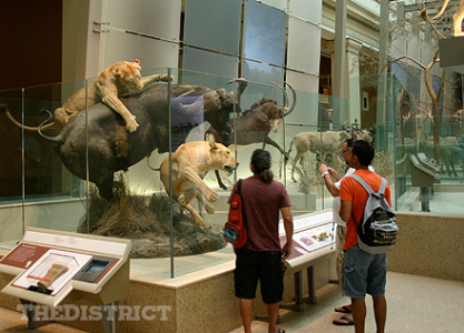 Smithsonian Museum of Natural History in Washington DC