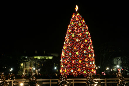 national christmas tree in Washington DC