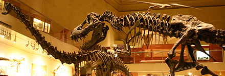 Top 10 Things to See in Washington, D.C. -- Smithsonian Natural History Museum