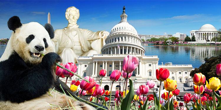 Washington Dc Tours >> Washington Dc Tourist Information Hotel And Travel Tips For