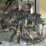 Photo documentation of The David H. Koch Hall of Fossils –– Deep Time exhibit at the Smithsonian Institution National Museum of Natural History in Washington, DC in May 2019. Exhibit opens to the public on June 8, 2019.